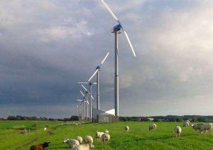 volksmolen-zijpe-schapen-mobile